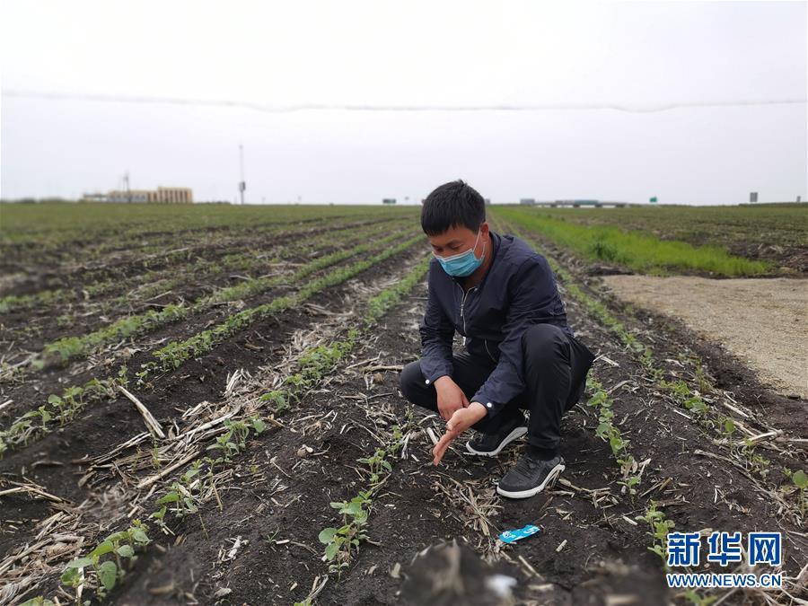 (在习近平新时代中国特色社会主义思想指引下——新时代新作为新篇章·习近平总书记关切事·图文互动)(4)让百姓吃得饱还要吃得好——夯实粮食安全基础端牢中国饭碗